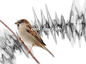 Burung bisa stres berat jika terus terpapar oleh suara bising
