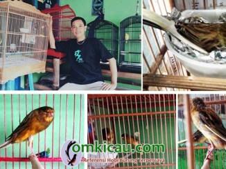 Andres Canary Farm
