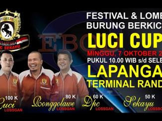 Luci Cup I