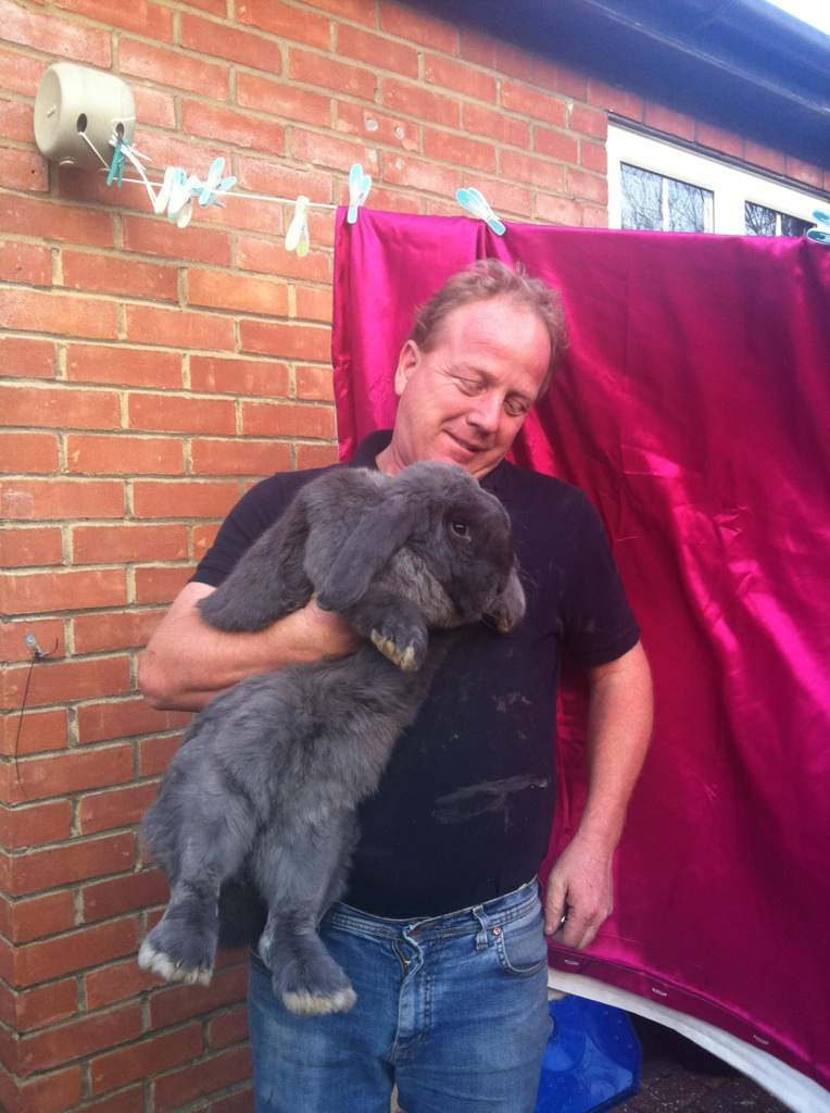 Flemish Bunny For Sale : flemish, bunny, Flemish, Giant, Rabbits, Breed, Information, Omlet