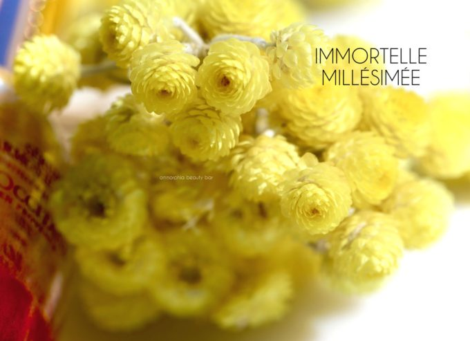 loccitane-immortelle-flowers