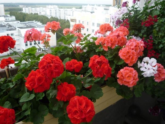 цветы горшок балкон