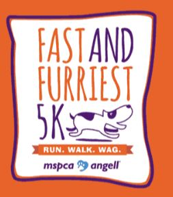 dog 5k race, somerville 5k races