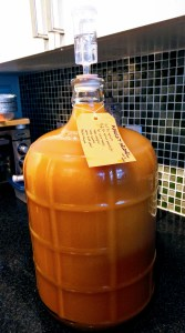 Apricot mead recently transferred into a 3-gallon carboy.