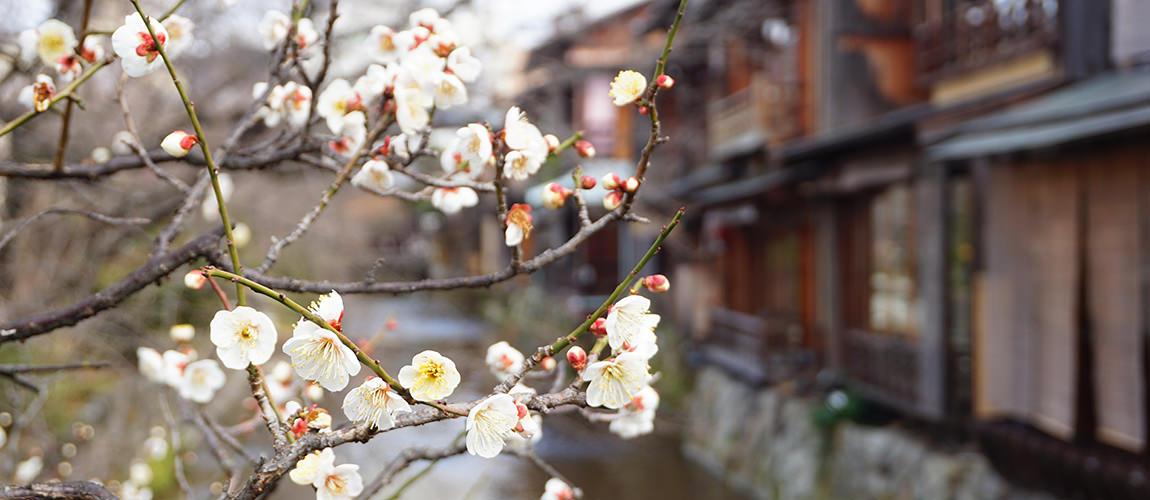 【日本京都景點】清水寺一日遊|懶人包|景點|交通|資訊介紹|東山區|