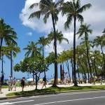 ハワイで子連れでレストランはおすすめはここ! 7