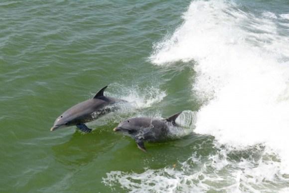 dolphin0911