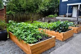 urban garden 1