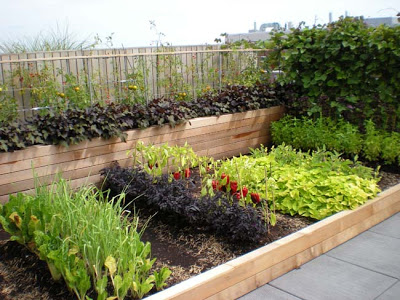 urban garden 13