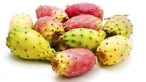 prickly-pear-cactus-seed-oil-opuntia-ficus-indica_2