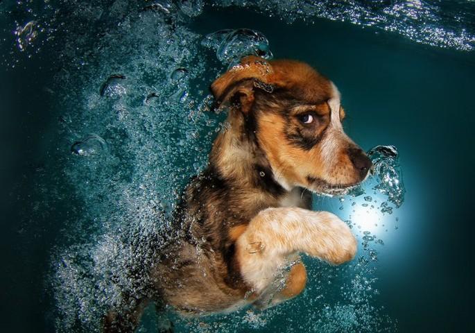 Cães mergulhando05