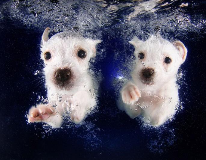 Cães mergulhando09