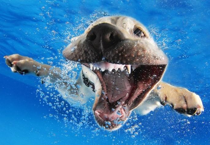 Cães mergulhando11