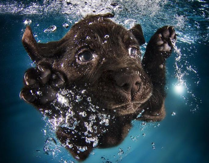Cães mergulhando12