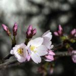 Rejuvenation- entering the round of Spring