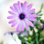 Spring meditation -seeds sown in spiritual soil