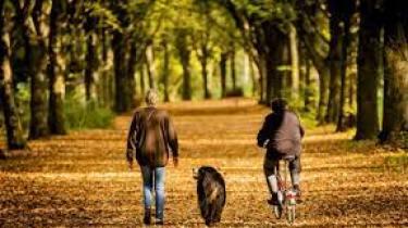 """Staatsbosbeheer: """"Laat de hond even niet los in het bos"""""""