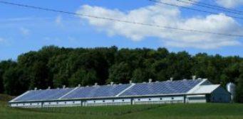 Crédito para programas de eficiência energética em Curitiba: imagem de aviário com painel solar