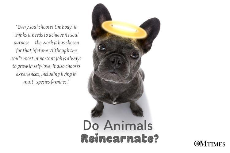 do animals Reincarnate?