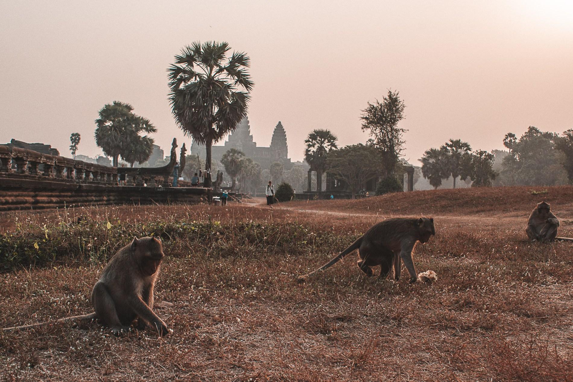 Dicas de viagem de Siem Raep