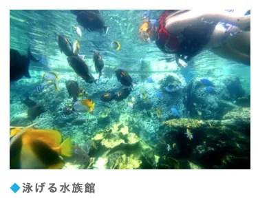 PICグアム泳げる水族館