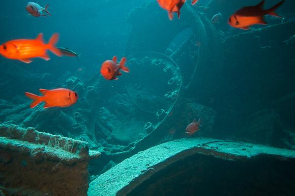 Thistlegorm Soldatenfische