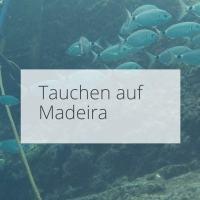Mit den Zackenbarschen auf Tuchfühlung – Tauchen auf Madeira