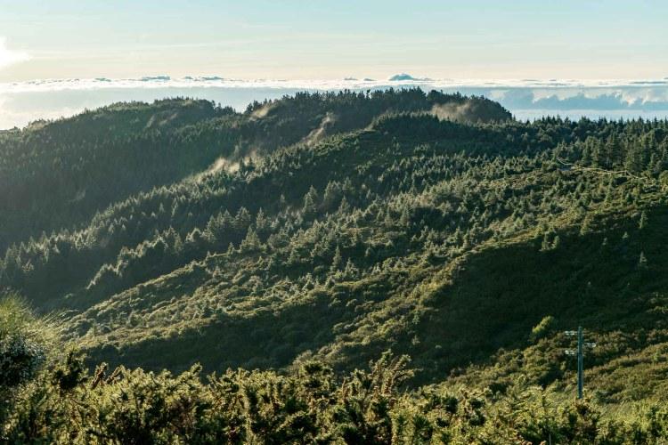 Wald im Nebel auf der Rückfahrt vom Pico do Arieiro