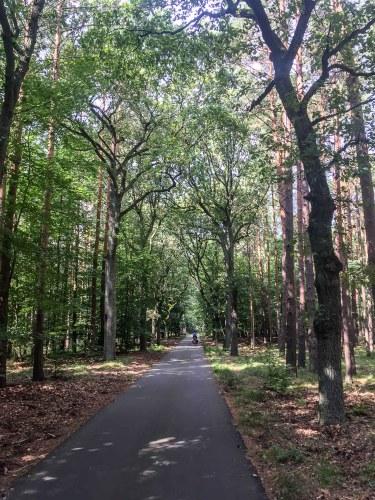 Mit dem Rad durch den Wald