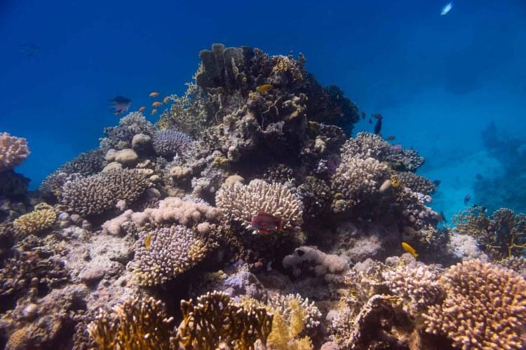 Korallengarten im Roten Meer