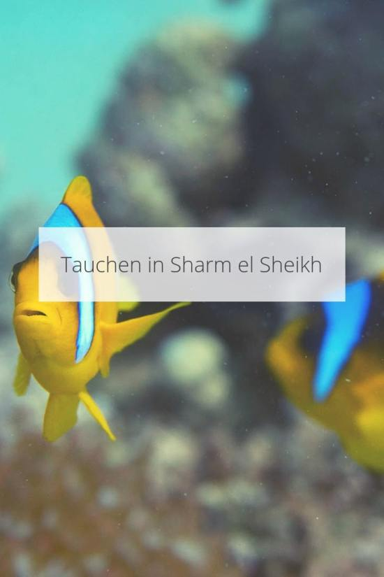 Tauchen in Sharm el Sheikh