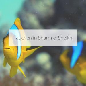 Tauchen in Sharm el Sheikh