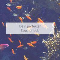 Dein perfekter Tauchurlaub