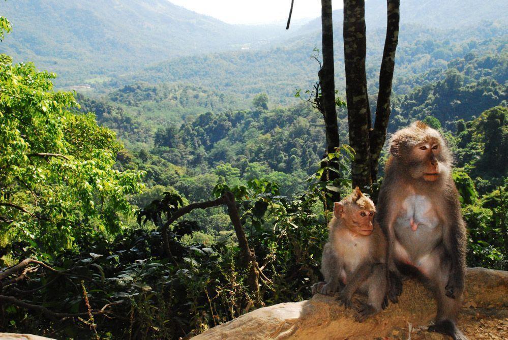 Lombok-qué-ver-bosque-de-los-monos