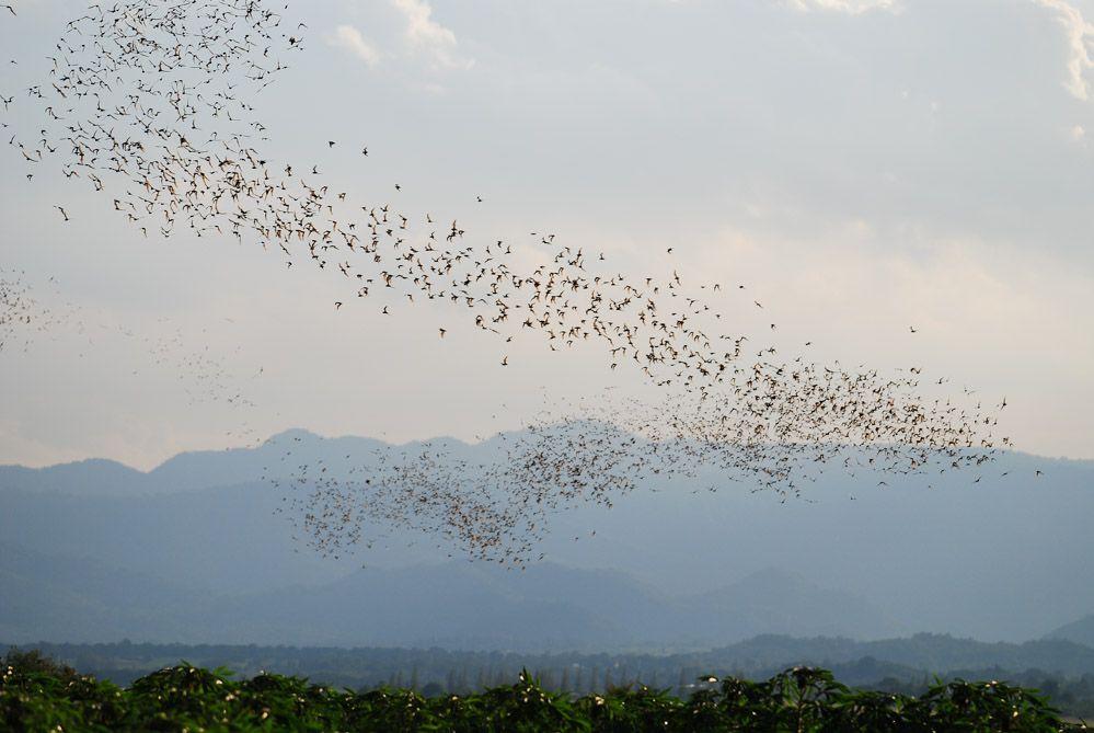 khao-Yai-tour-de-los-murciélagos