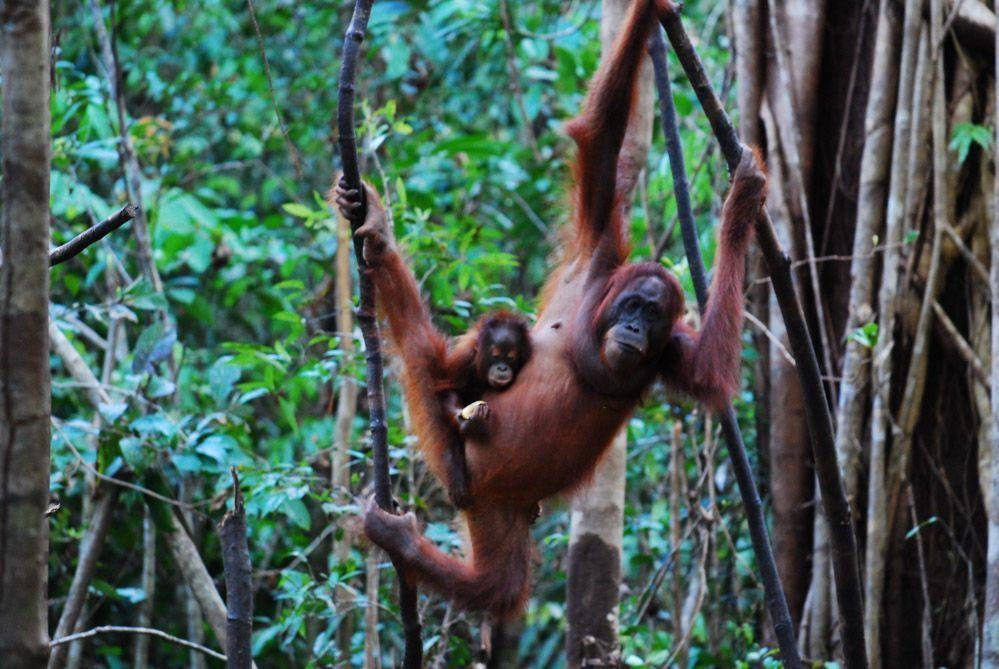 Selvas-de-Indonesia