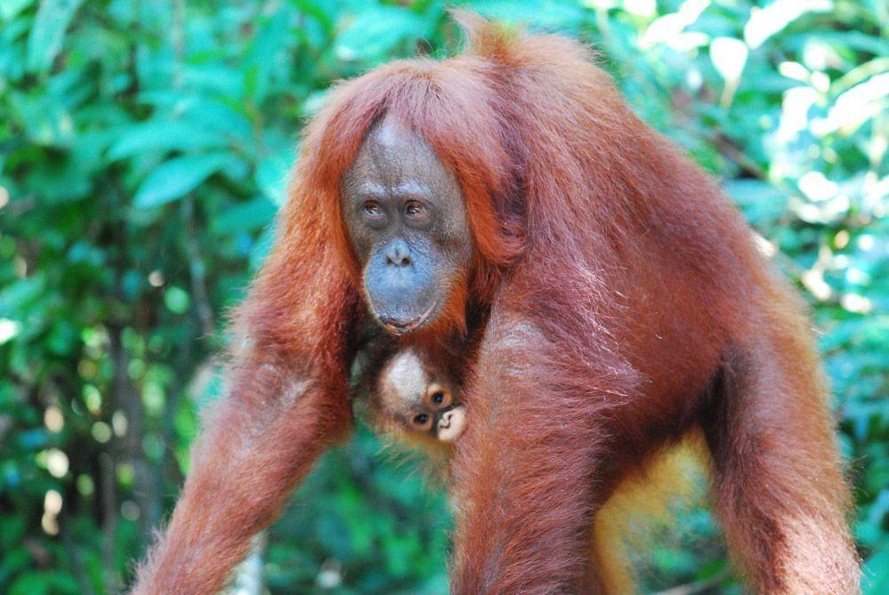fotos-Borneo