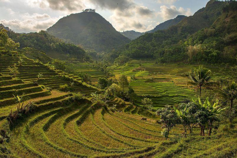 campos-de-arroz-Java