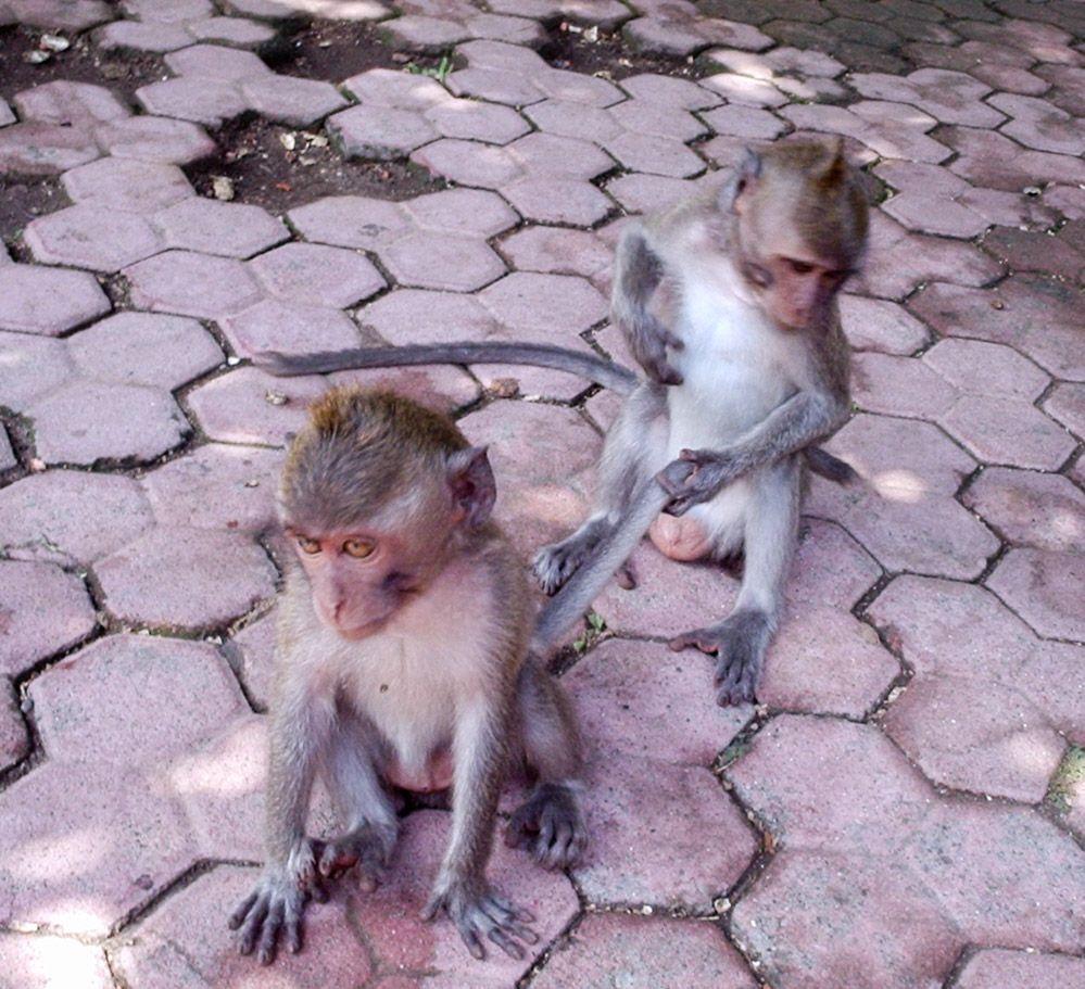 monos-Bali