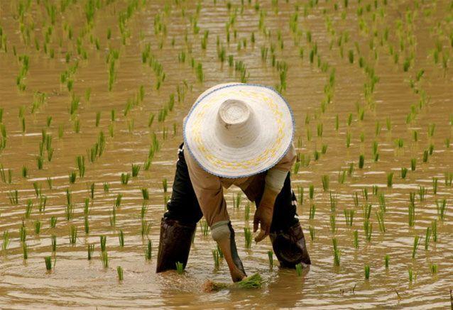 El-Triángulo-de-oro-de-Tailandia