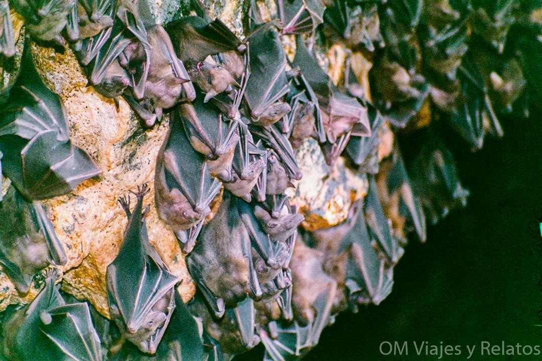 cueva-sagrada-de-los-murciélagos-Bali
