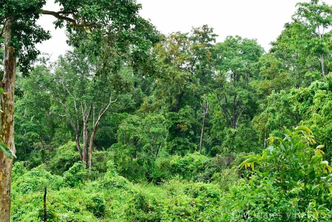 Parques-Nacionales-India-Safari-Nagarhole-Kabini