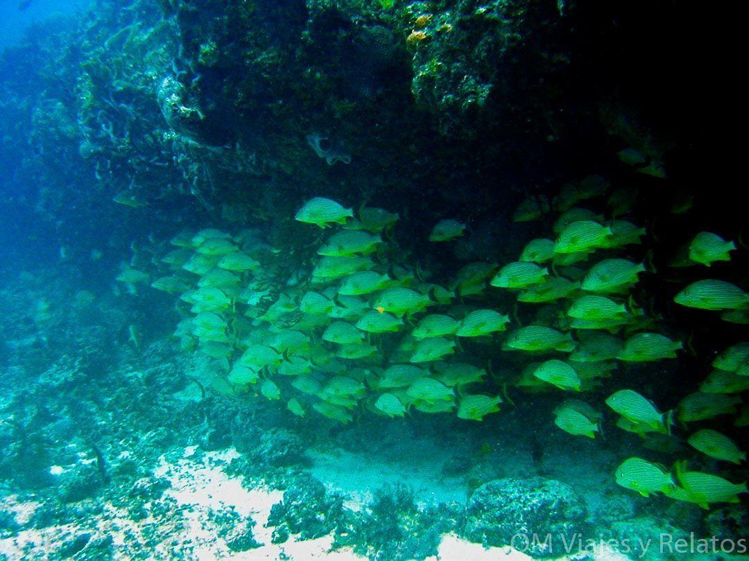 las-mejores-excursiones-de-la-Riviera-Maya-arrecifes-buceo
