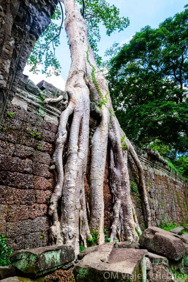 las-selvas-de-Angkor