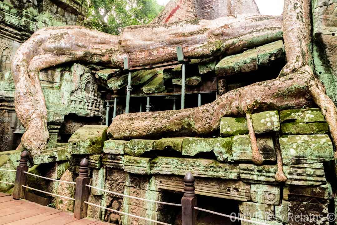 raíces-Angkor