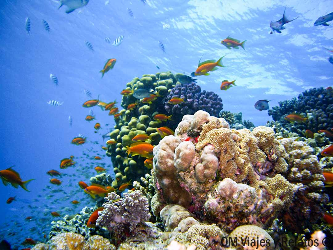 buceo-Mar-Rojo-Egipto