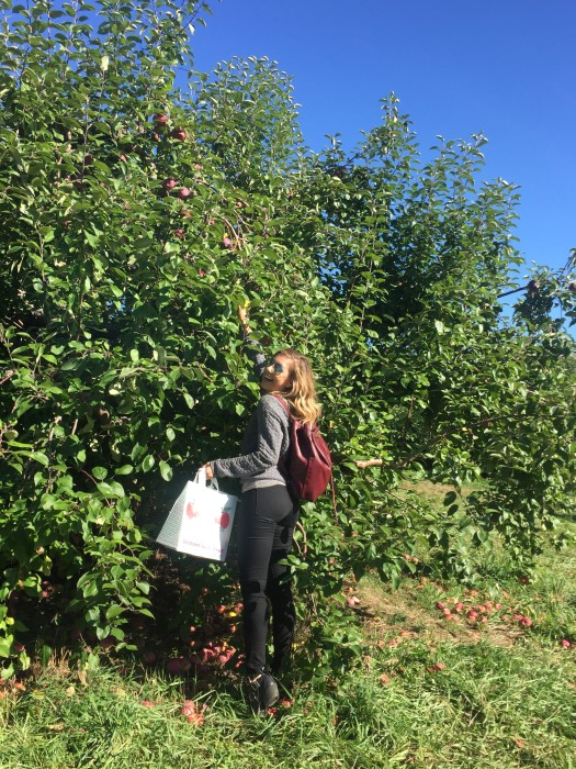 apple picking, road trip, nyc,  fall