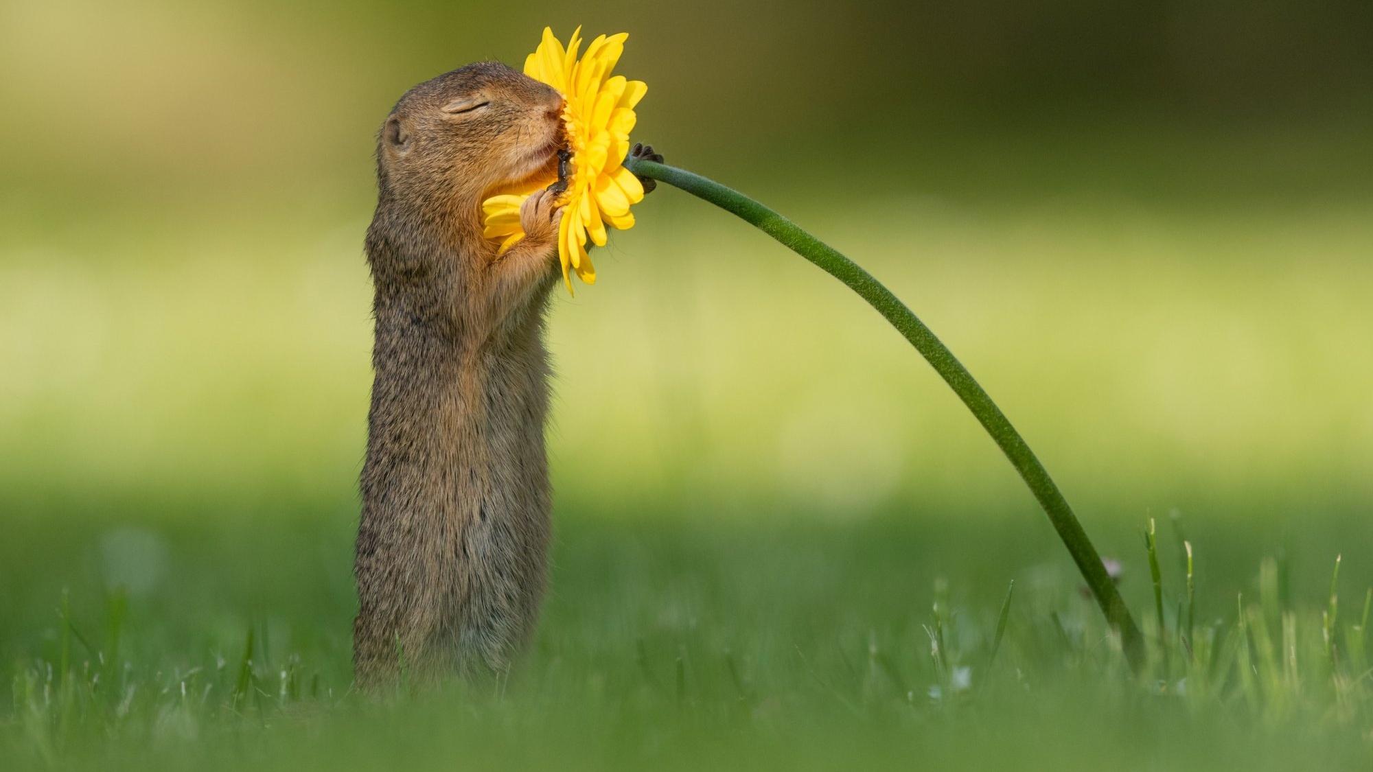 Eekhoorn-foto-Dick-van-Duijn-Cropped.jpg