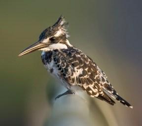 Bird ID 4