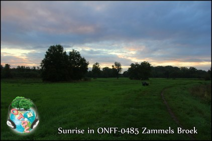 ONFF0485_003
